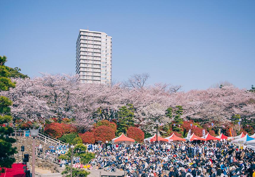 Cherry festival 2020
